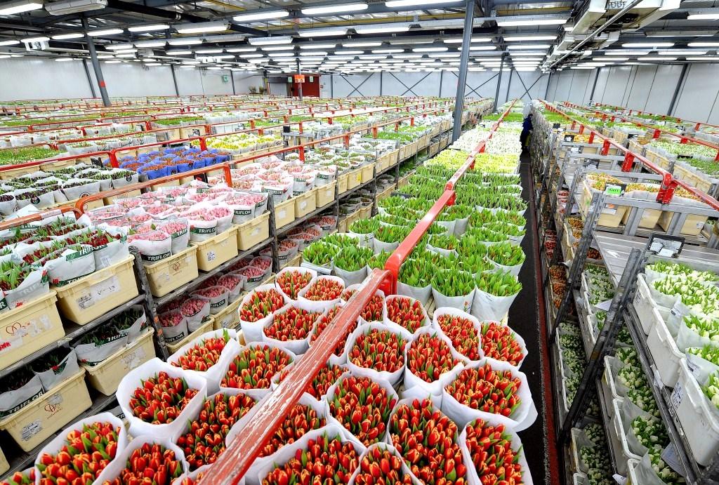 Магазин цветов, в голландии закупить цветы